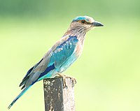 List of birds of India - Wikipedia