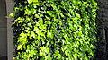 Ivy in Stanford Univ.jpg