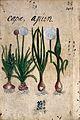 Japanese Herbal, 17th century Wellcome L0030058.jpg