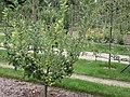 Jardin Albert Kahn, Boulogne-Billancourt (9970264203).jpg