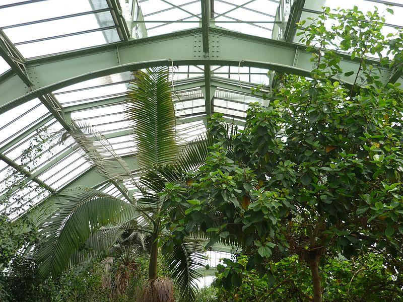 Le jardin des plantes parisetlouisville - Jardin des plantes aix les bains ...