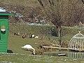 Jazierko pri kaštieli - panoramio.jpg
