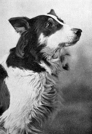 Jean and the Calico Doll - Jean, the Vitagraph Dog