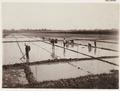 KITLV - 30200 - Kurkdjian, N.V. Photografisch Atelier - Soerabaja - Sugar plantation in East Java - 1921.tif