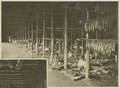 KITLV - 5403 - Kleingrothe, C.J. - Medan - Women stringing tobacco in the drying barn at a plantation in Deli - circa 1900.tif