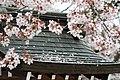 Kairakuen (7125522819).jpg