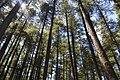 Kalaam Forest.JPG