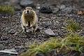 Kamchatka I'm on my way! (16131974315).jpg