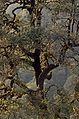 Kedarnath Wildlife Sanctuary JEG9491.jpg
