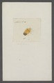 Kend - Print - Iconographia Zoologica - Special Collections University of Amsterdam - UBAINV0274 040 02 0038.tif