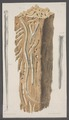 Kend - Print - Iconographia Zoologica - Special Collections University of Amsterdam - UBAINV0274 080 01 0003.tif