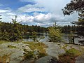 Killarney Provincial Park (Trees growing on a rock).jpg