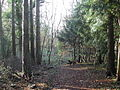 King's Wood - typical scenery - geograph.org.uk - 87577.jpg