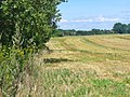Kleinbeeren - Feldrand (Field Edge) - geo.hlipp.de - 41175.jpg