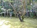 Koutou-in 7.JPG
