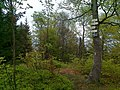 Kowadlina - panoramio.jpg