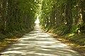 L'allée ds tilleuls reliant les châteaux de Givenchy-le-Noble et Lignereuil 05.jpg