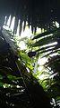 Laika ac Howler Monkey (7174448845).jpg