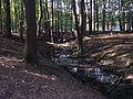 Lainzer Tiergarten Wald 03.jpg