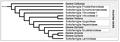 Lamiaceae - Cladogramma della famiglia.png