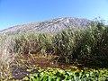 Landscape-Dragoman marsh-Chepan-2.jpg