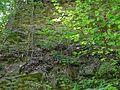 Landschaftsschutzgebiet Gestorfer Lößhügel - Steinbruch (10).JPG
