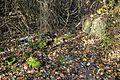 Landschaftsschutzgebiet Rottsberghang - Mittlerer Teil (20).JPG