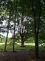 Landschap in Nationaal Park Sallandse Heuvelrug (7).jpg