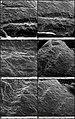 Lapa do Santo - Sepultamento 21 - Microscopia Eletronica de Varredura MEV Tibia Esquerda 2.jpg
