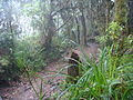 Lascar Torrential rain and hail on the first day climbing (4460842246).jpg