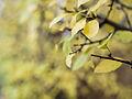 Late autumn colours (11162025046).jpg