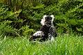 Lemur (26618642977).jpg