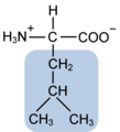 Leucine w functional group highlighted.png