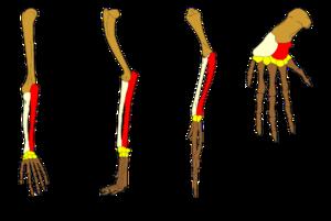 Homologi (biologi) – Wikipedia