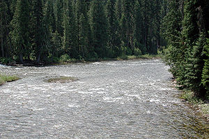 Headwaters of the Lochsa River near Powell, Id...