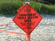 "An orange diamond sign with the words ""Loggerhead Turtle Nesting Area"" is blocking off a roped-off area on the beach where a loggerhead has laid eggs."