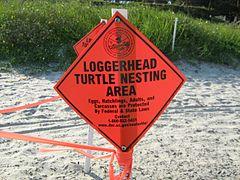 """Un letrero de diamante naranja con las palabras """"Área de anidación de la tortuga boba"""" bloquea un área acordonada en la playa donde una boba ha puesto huevos."""