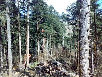 Department of Forests and Park Services of Bhutan - Extracting timber using WYSSEN cable crane in Dawathang FMU in Bumthang