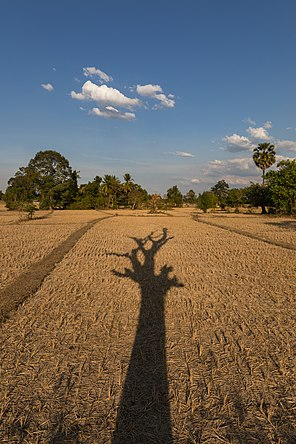 Long shadow of a dead tree with its branches on the dry fields of Laos - portrait.jpg