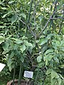 Lorto-botanico-di-padova-2016 28340423396 o 26.jpg