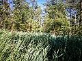 Lundener Niederung Naturschutzgebiet S-H Schilf.jpg