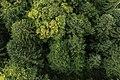 MK57903 Bäume am Freibergsee.jpg