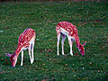 Maastricht Deer Farm.jpg