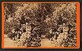 Magnolia-on-the-Ashley, Charleston, S.C, by Havens, O. Pierre, 1838-1912 4.jpg