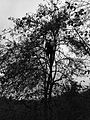 Man and the apple tree.jpg