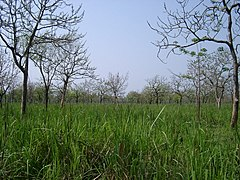 Manas Wildlife Sanctuary-110510.jpg