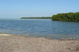 Fat Deer Key - Mangrove Beach in Fat Deer Key