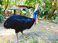 Manila Zoo Cassowary by TeamJonalynViray.jpg