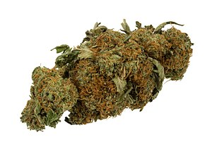 "Effects of cannabis - A marijuana ""bud"""