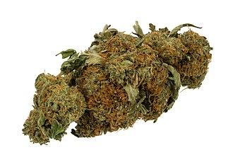 Medical cannabis - Dried cannabis bud can be used for medical therapy.